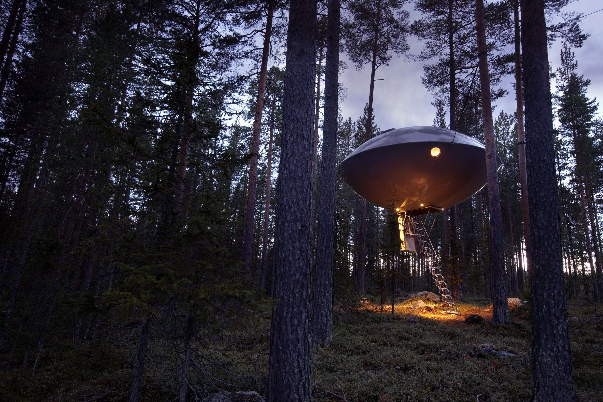 a UFO shaped hotel room suspended amongst tall trees at Treehotel Sweden
