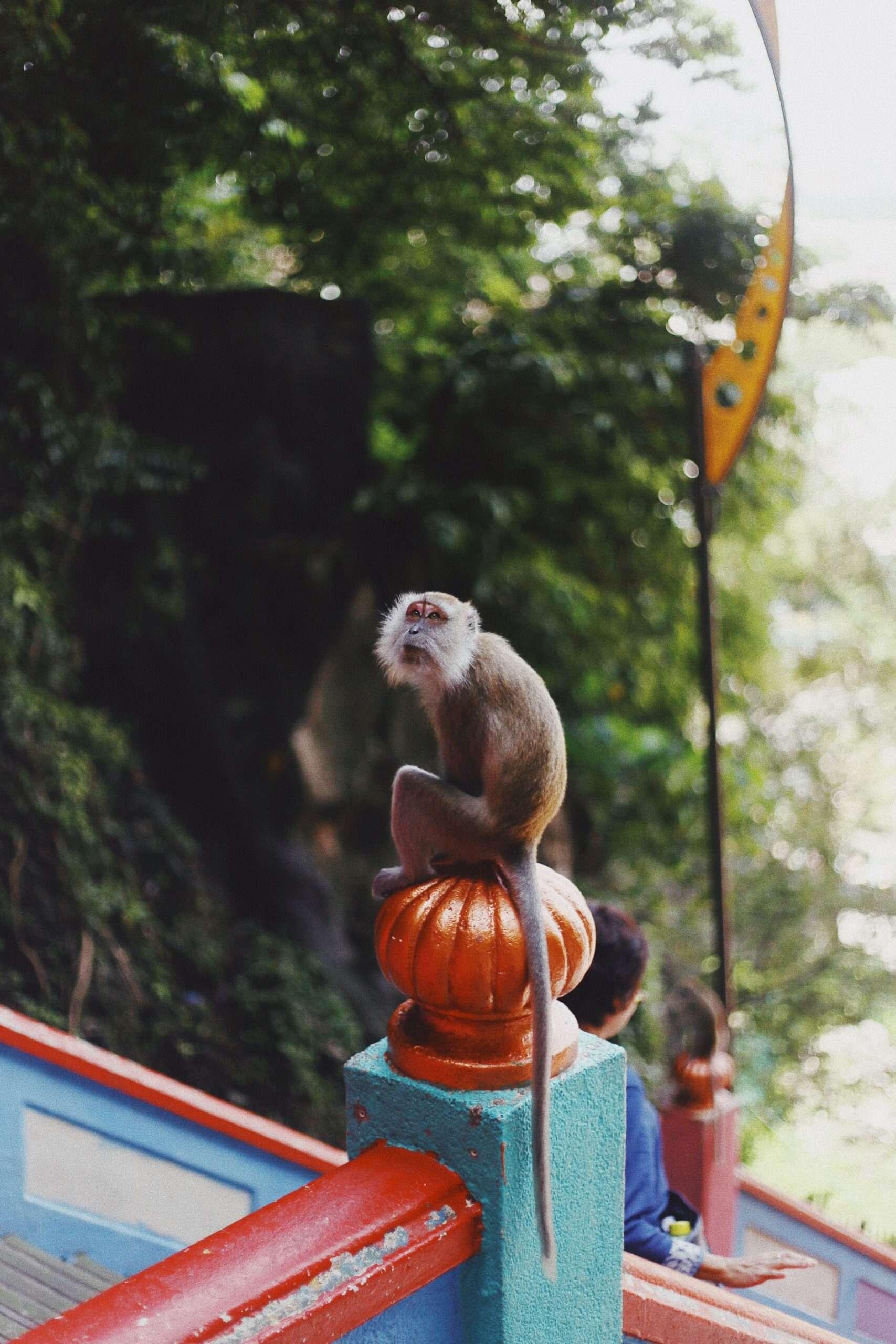 monkey sits on a pillar at the Batu Caves Kuala Lumpur