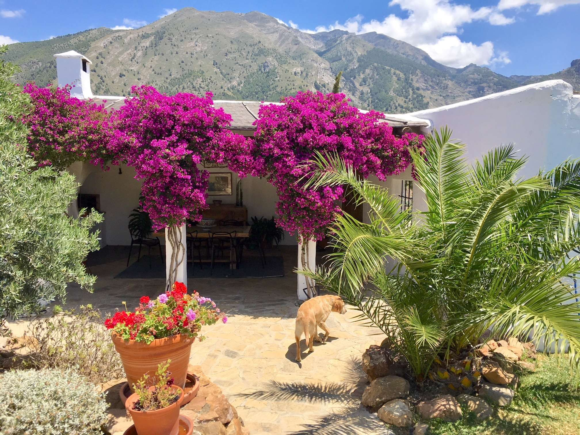 Dog walks around the outdoor area with purple blooming flowers at Villa El Carligto in Spain