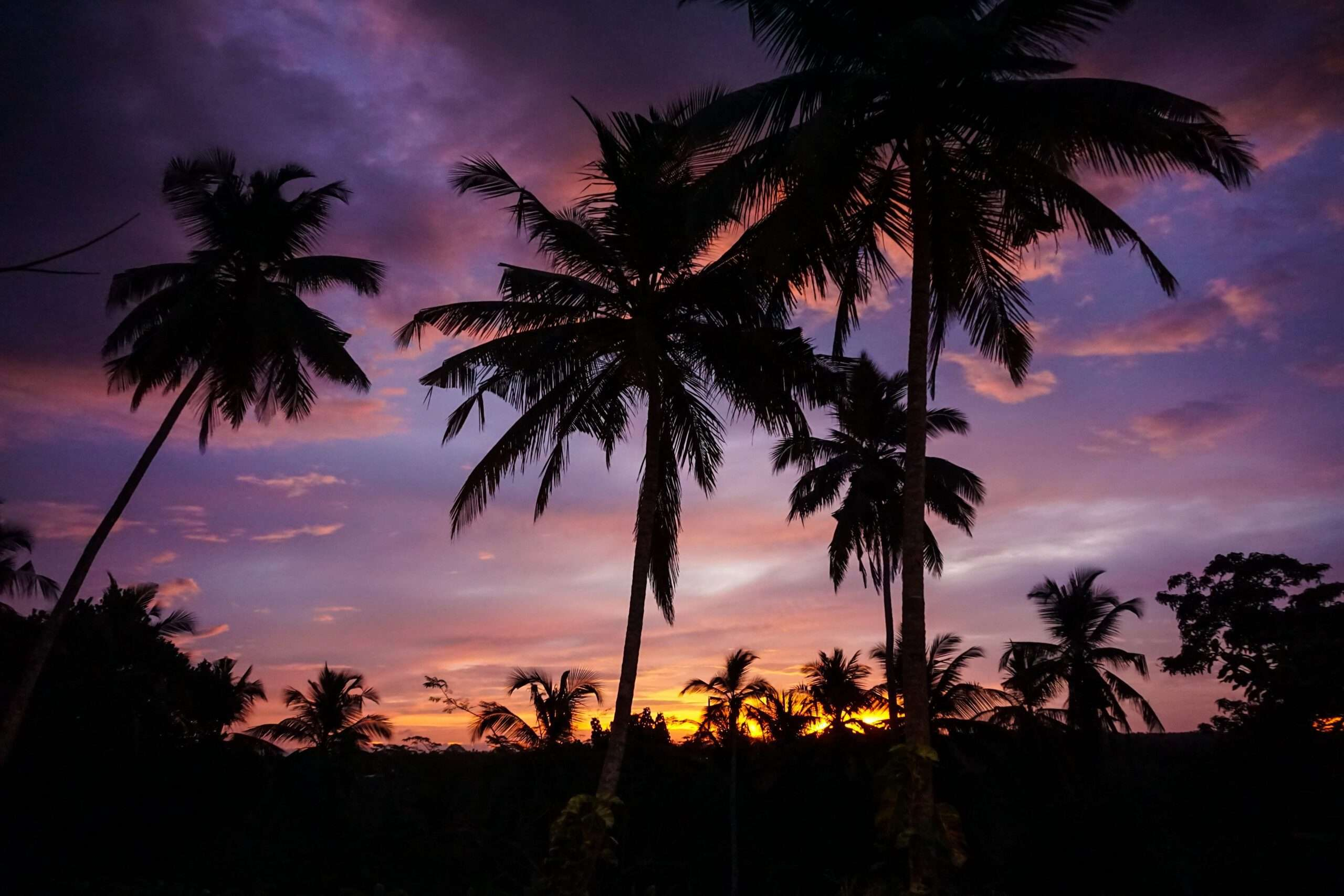 silhouette of palm trees against a sunset sky lit up purple and orange, at Villa Wambatu, one of the top villas in the world