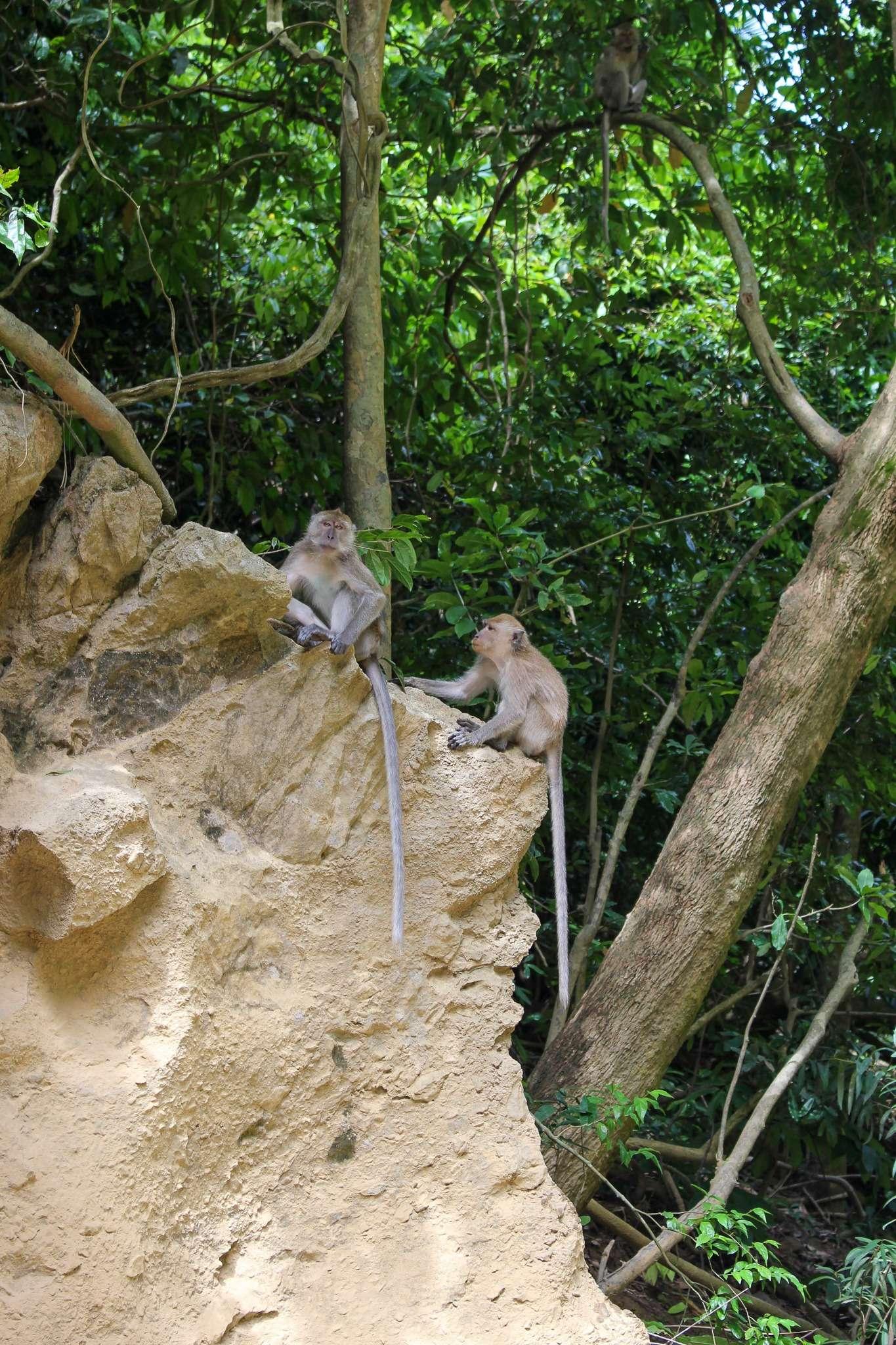 two monkeys sat on a rock in Khao Sok National Park, Elephant Hills Thailand