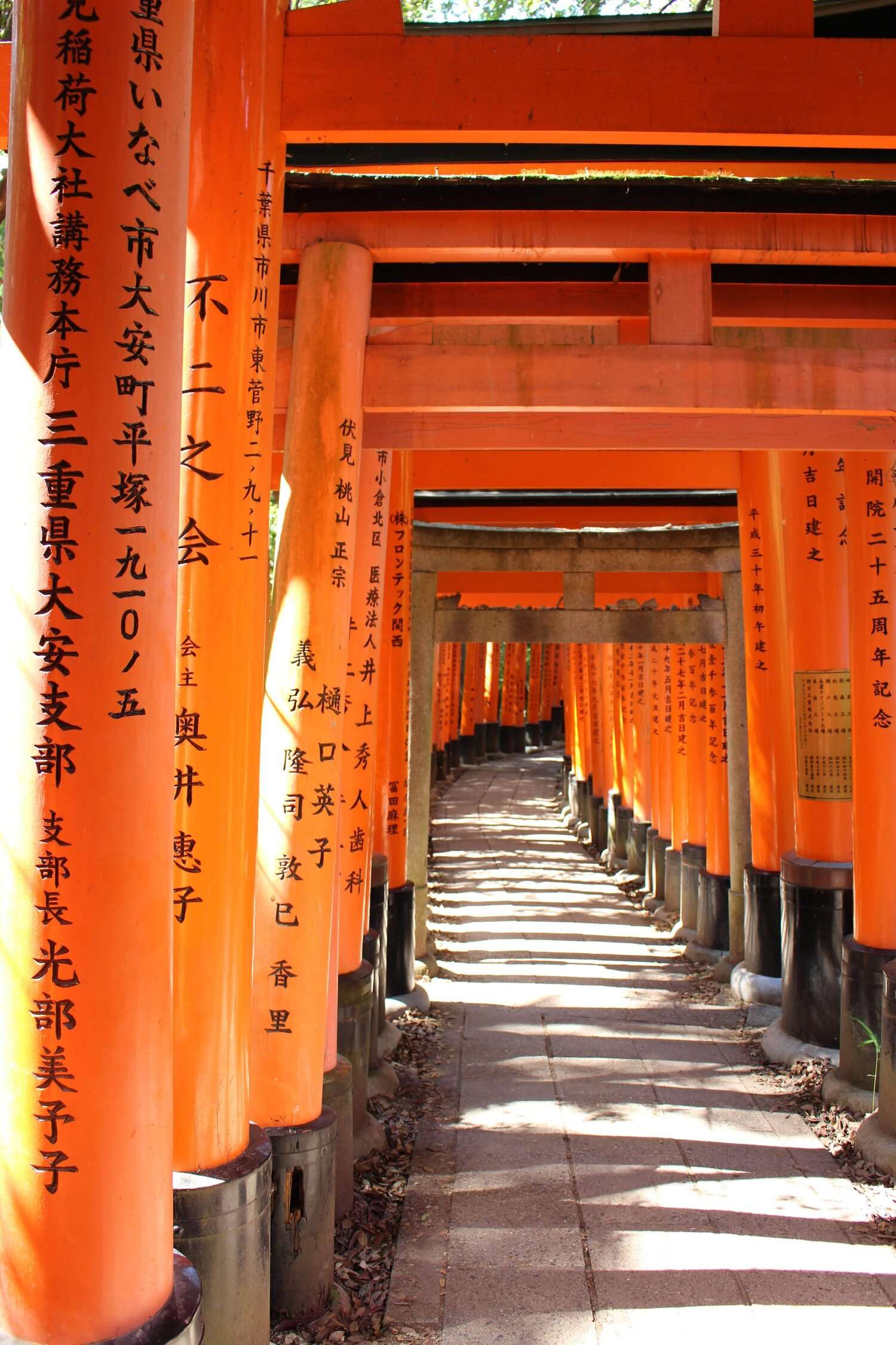 tunnel of orange arched shrines at a temple in Kyoto