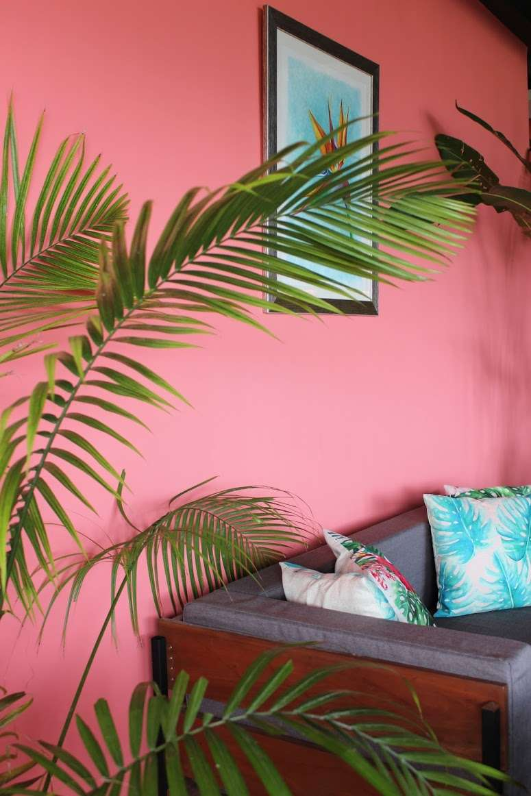 pink wall, cushioned sofa and a large tropical plant inside Chido Cafe, from the owners of La Casita de Baclayon in Bohol, Philippines