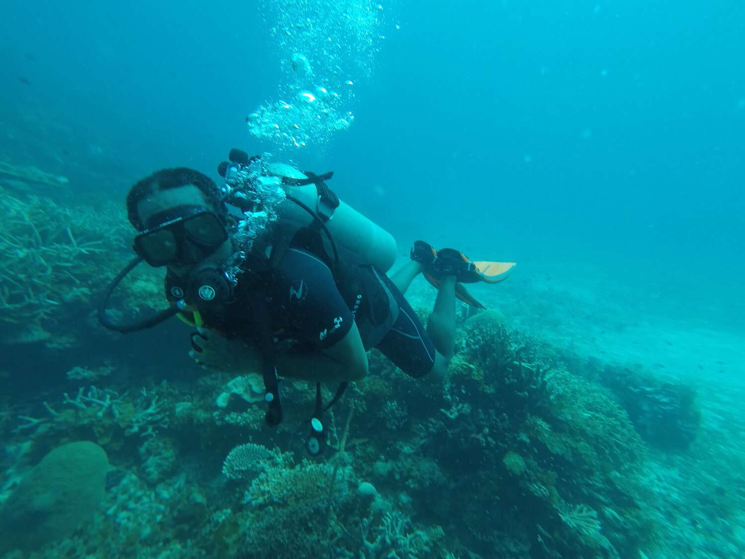 man wearing a wetsuit and scuba tank dives above the reef in Utila