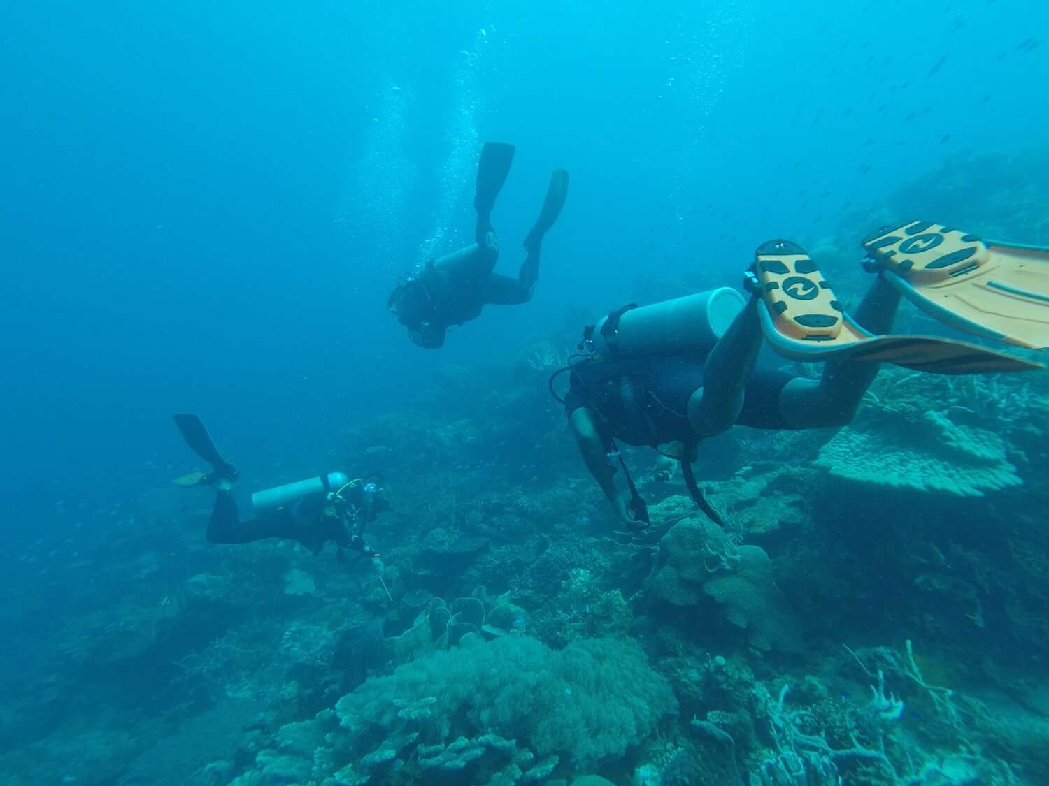 three scuba divers swimming over the reef whilst diving in Utila