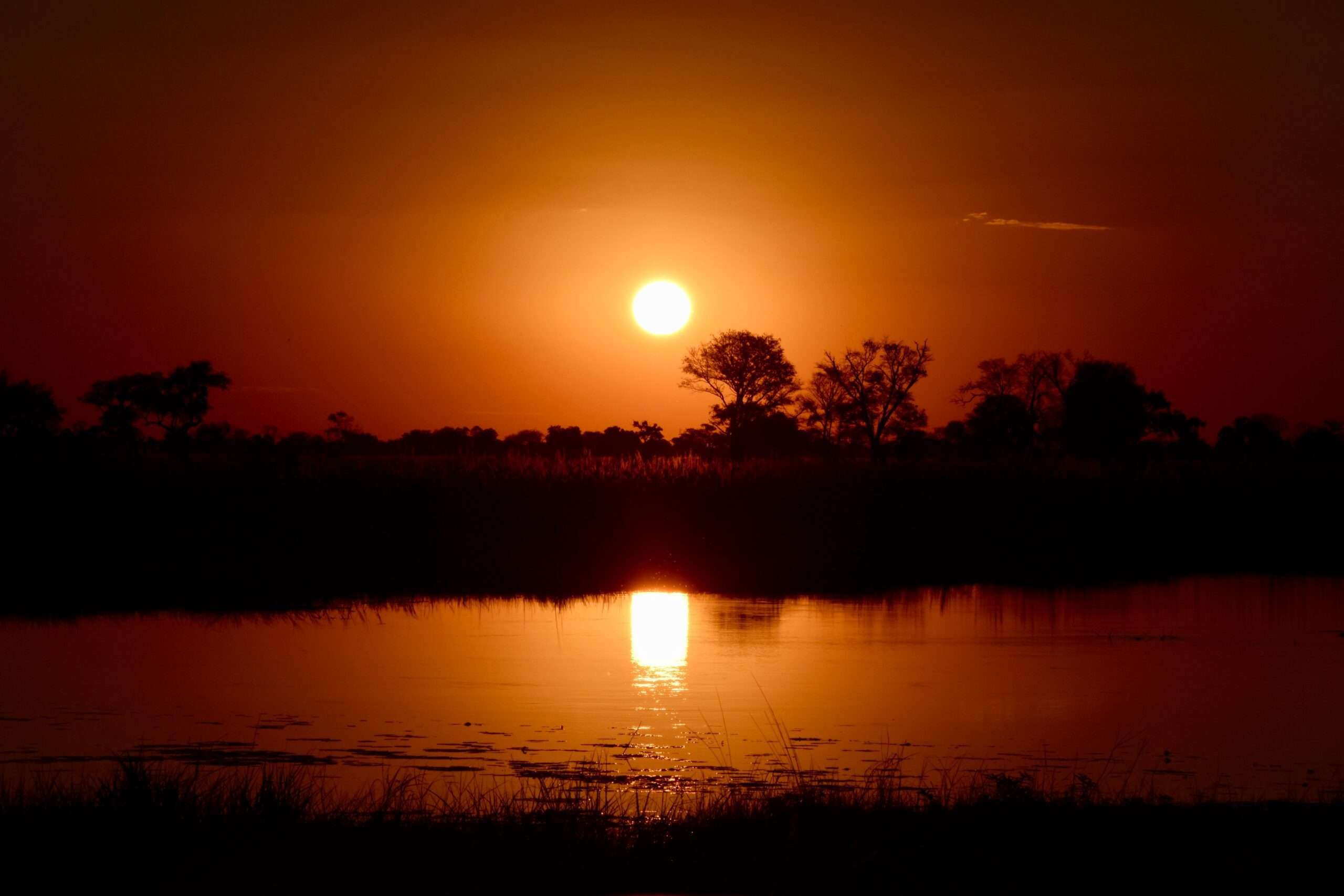 bright red sunset with silhouettes of trees and reflection in the water in the okavango delta