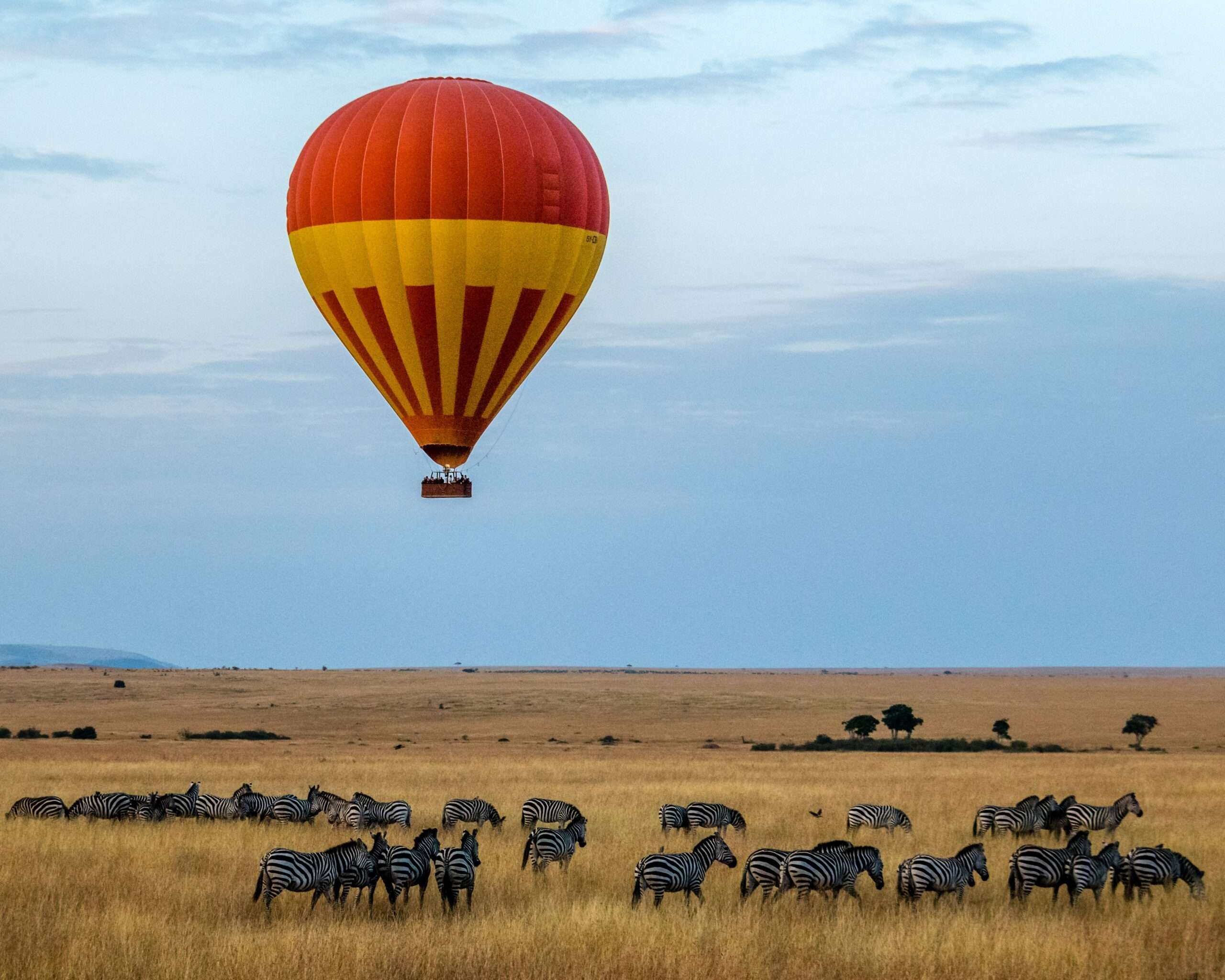red and yellow hot air balloon over a herd of zebras in Africa