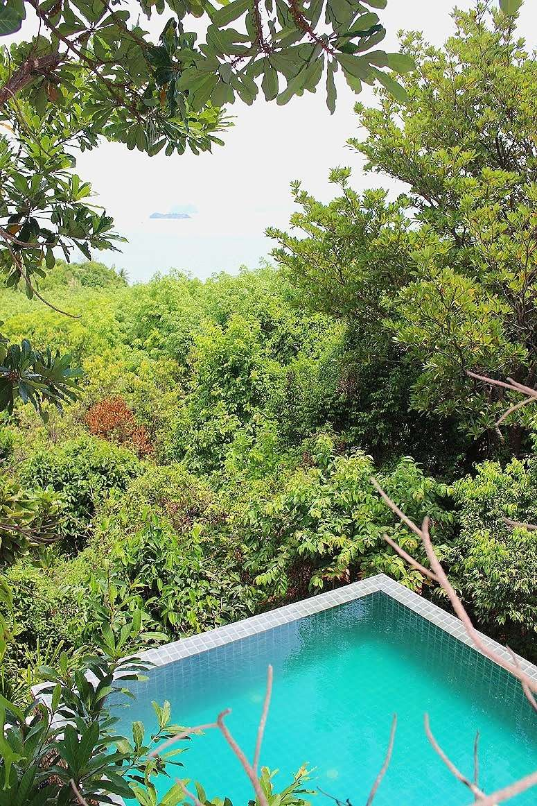 swimming pool set amongst the trees at The Island Hideout Koh Yao Noi