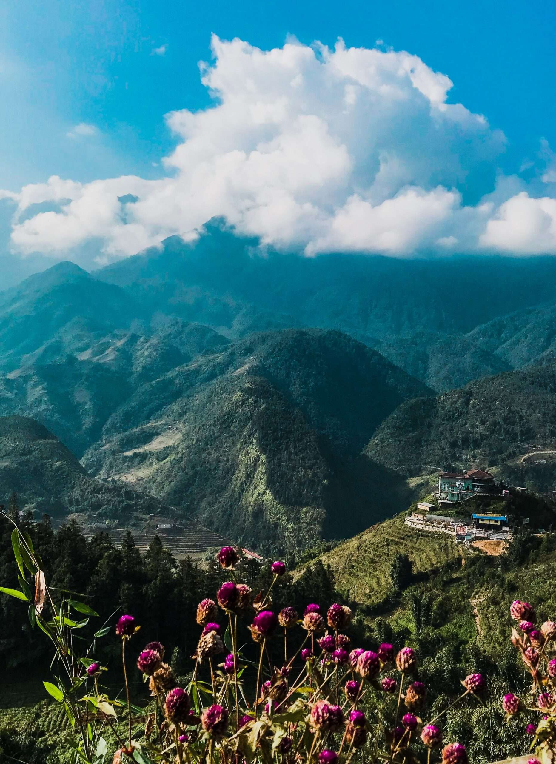 mountains covered in green rice paddies, location for trekking in Sapa