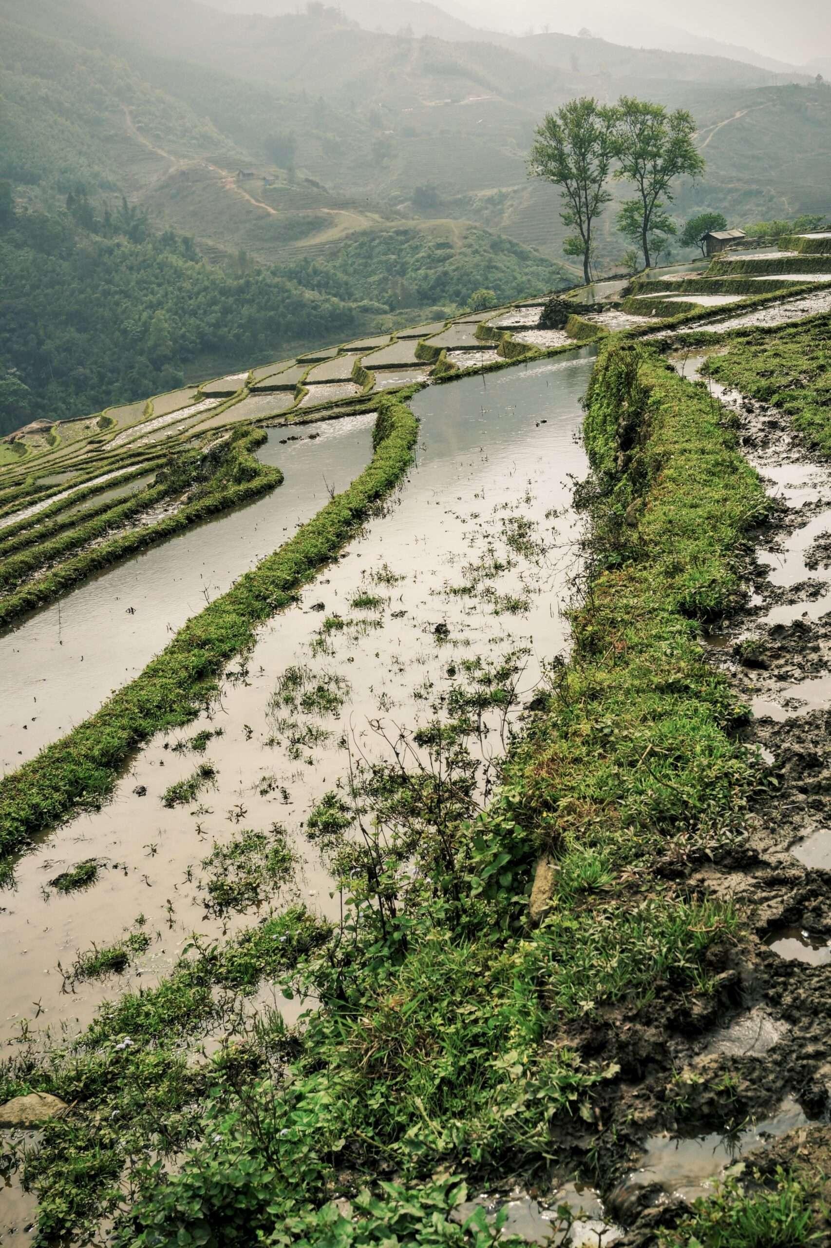 rice paddies submerged in water, seen whilst trekking in Sapa