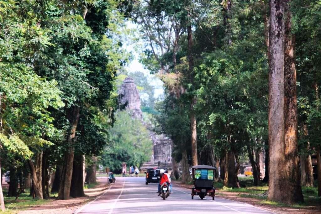 tuk tuk drives down a road between tall trees at Angkor Archaeological Park, Cambodia