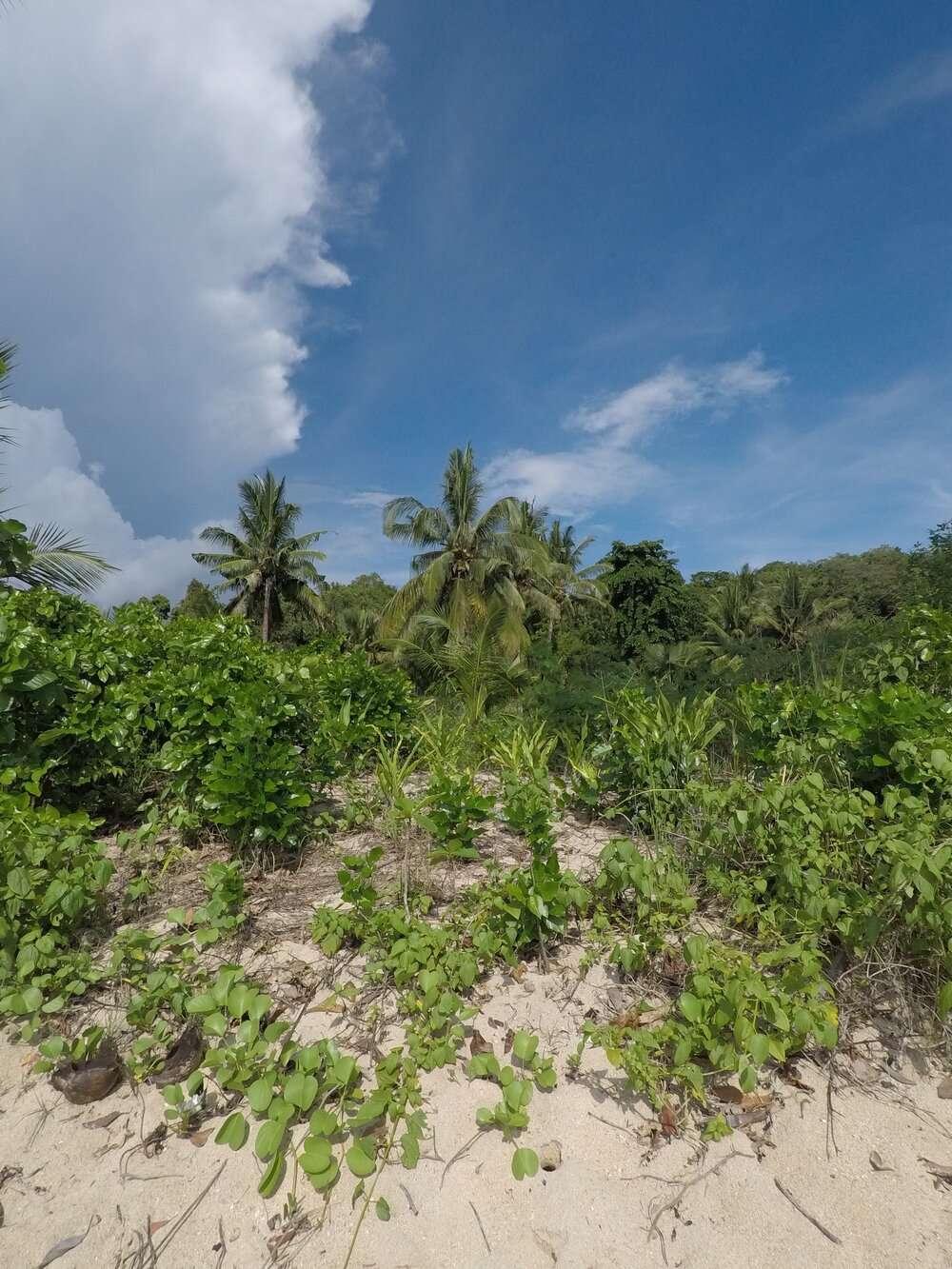 Private Beach in Atremaru Jungle Retreat in the Philippines
