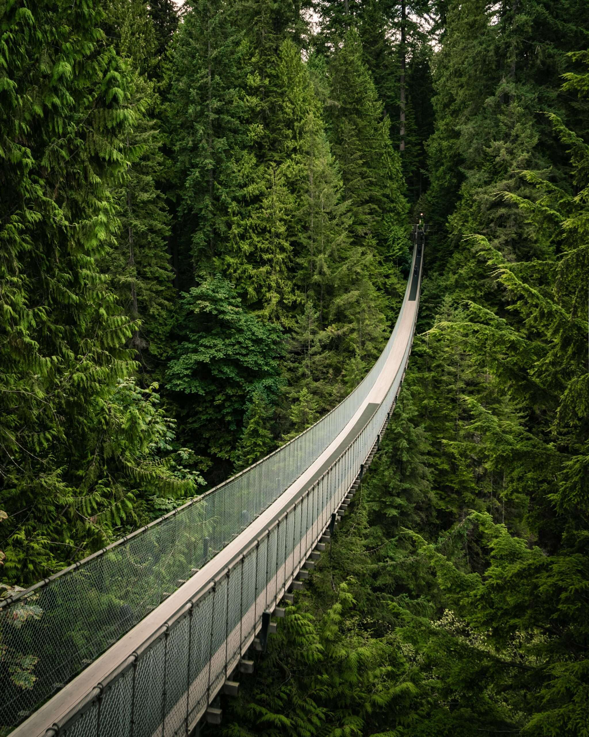 Capilano suspension bridge above thick forest in Vancouver