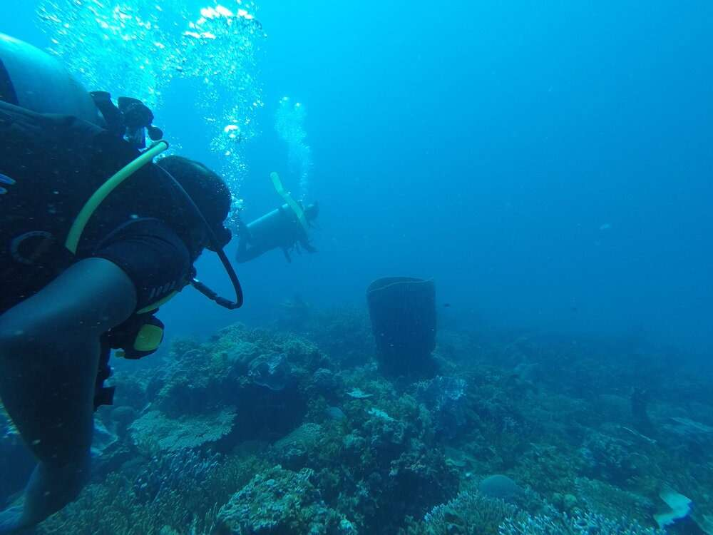 Scuba divers observiing the coral in El Nido Philippines
