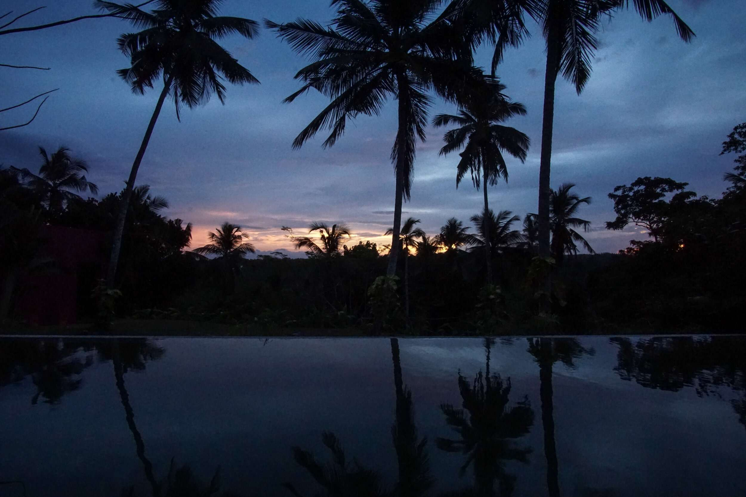 dark sunset silhouette of palm trees with reflection in the pool in front